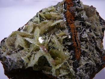 Thin green wulfenite crystals