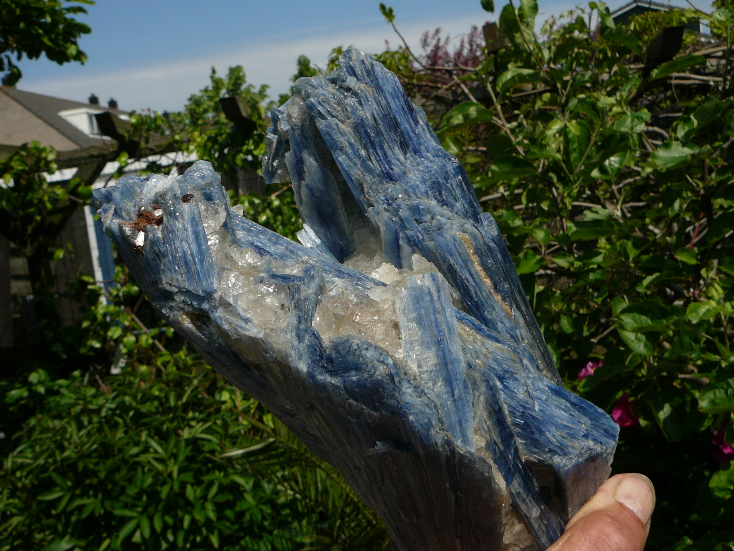 Blue kyanite crystals in a matrix of semi-transparent quartz