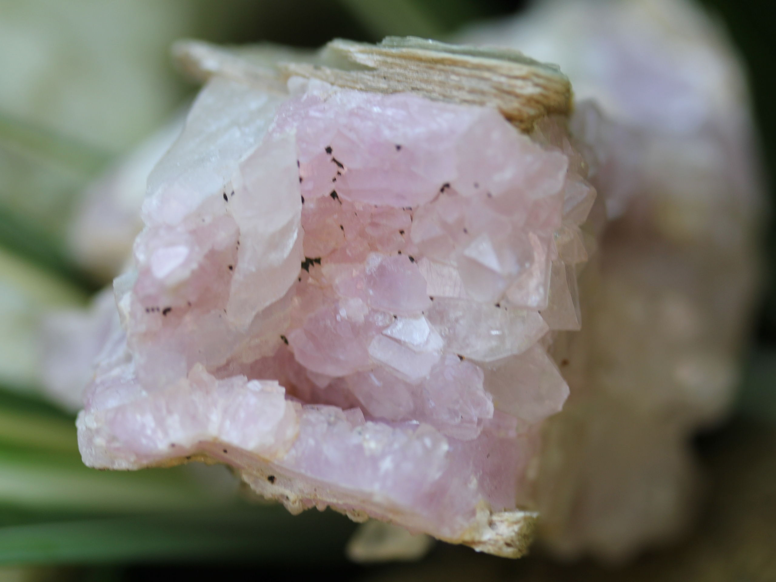 Light-colored rose quartz crystals