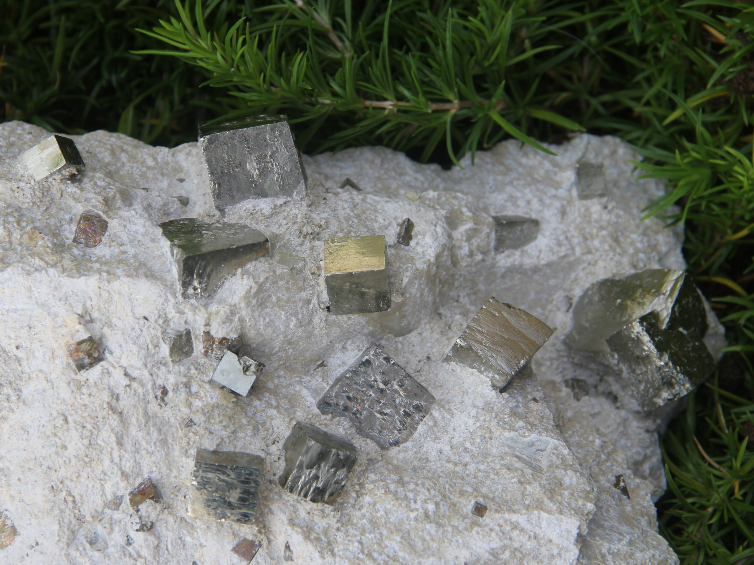 Pyrite in marl