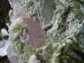 Beryl (var. Morganite) with green tourmaline crystals