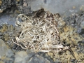 Native Silver wires in small cavities